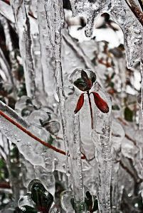 ice palace by Tim Hauser -  Click on the image to enlarge.