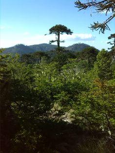 Parque Nacional Nahuelbuta. Foto de Diego Casanueva Goldberg.