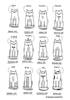 the cat's miaow (gemma connell)