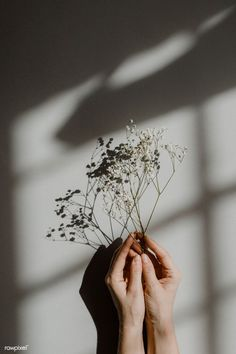 Woman holding white flowers on a gray background Gray Aesthetic, Black And White Aesthetic, Aesthetic Drawing, Flower Aesthetic, Aesthetic Images, Aesthetic Collage, Aesthetic Vintage, Aesthetic Women, Aesthetic Bedroom