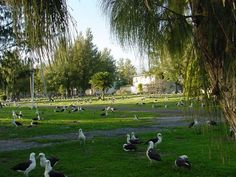 Nice_Street_3 Midway Atoll, Beautiful Places To Live, Islands, Dolores Park, War, Street, Nice, Pictures, Travel