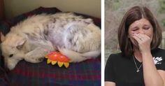 Creía haber salvado la vida de un solo perro, pero descubre que ha salvado a cinco más. Emocionante