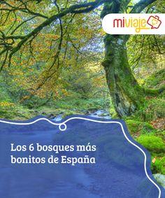Los 6 bosques más bonitos de España   En #España hay muchos los #bosques que merecen una #visita, pero en #otoño, el cambio del verde por una intensa gama ocre, los hacen dignos de una postal. #Tops