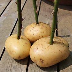 10 trucchi per il giardinaggio che terranno le vostre piante in salute