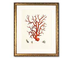 Cuadro Corali II - rojo y crudo