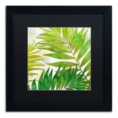 "Trademark Art 'Brasilia II' Framed Graphic Art Mat Color: Black, Size: 16"" H x 16"" W x 0.5"" D"
