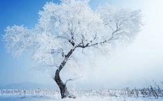 Winter Tree Snow Wallpaper http://beyondhdwallpapers.com/winter-tree-snow-wallpaper/ #Winter #Wallpapers #Nature #Wallpaper #HD #Backgrounds #Snow