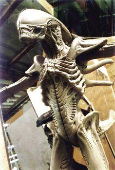 1/2 scale alien sculpted for Alien: Resurrection by Steve Wang, Special Makeup FX artist. via steve wangs MySpace Blog