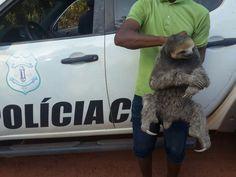 Animal encontrado com dupla não apresentava ferimentos  (Foto: Divulgação/Polícia Civil)