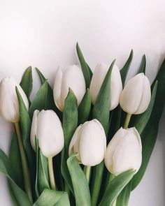 by brigitte tohm Leaves Wallpaper Iphone, Iphone Wallpaper Vsco, Phone Wallpaper Design, White Tulip Bouquet, White Tulips, Amazing Flowers, Beautiful Flowers, Flower Aesthetic, Wedding Flower Arrangements