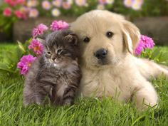 keikozakky: 淡々と犬猫のコピペを貼り付けるスレ『襖越しに猫に話しかけてはいけない』 哲学ニュースnwk   livedoor.jp
