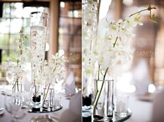 orchids, one in water, other two in small vases
