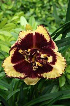 We are America's largest grower and online retailer of high quality daylilies, iris, peonies and other premium perennials. House Color Schemes, House Colors, Yellow Theme, Brown Trim, Day Lilies, Back Gardens, Perennials, Lily, Floral