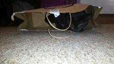marmite hiding in a bag