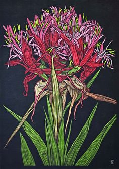 GYMEA LILY 73 X 52 CM EDITION OF 50 HAND COLOURED LINOCUT ON HANDMADE JAPANESE PAPER $1,250