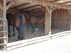Unser Unterstand, 20qm gross ist befüllt mit Grünkompost als Einstreu und sehr beliebt wenns regnet oder um ein Nickerchen zu halten. Nach vier Jahren Grünkomopst sind wir nach wie vor begeistert von dieser Grundeinstreu. In Zwischenzeit ist der Grünkompost erdig geworden und wir haben Holzschnitzel darüber gestreut . Es sieht einfach toll aus. Auch der zweite 30qm grosse Unterstand ist nun mit Holzschnitzel befüllt und ist für die Pferde ein Liegeparadies. Seit April 2017 mischen wir die…