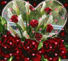 gif rosas