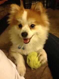 Cheechi best dog ever <3