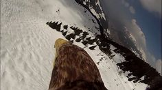 Flying eagle point of view #2