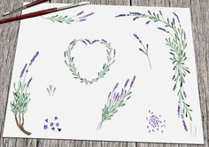 Real handpainted clip art flowers. If you would like it in different colors, I can change it FREE!  Lovely cottage chic lavender (lavandula angustifolia)