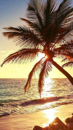 New Landscape Sunset Beach Palm Trees Ideas Tree Wallpaper Iphone, Beach Wallpaper, Nature Wallpaper, Wallpaper Backgrounds, Iphone Backgrounds, Iphone Wallpapers, Strand Wallpaper, Landscape Photography, Nature Photography