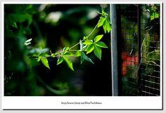 10/04/2009 - TuenLong(HK),MyHomeXD