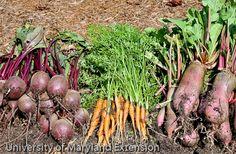 Grow it Eat it - UMD