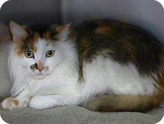 Kiki, a cat for adoption.