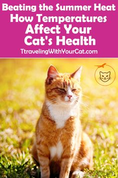 100 Cat Health Ideas Cat Health Cats Cat Care