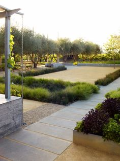 Olive trees, ornamental grasses, decomposed granite