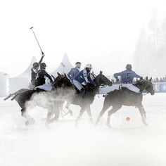 Horse cultures: St. Moritz polo cup on snow