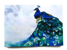 Peacock Watercolor ACEO Fine Art Print