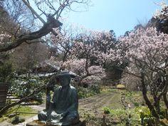 Plum at ToukeiJi, Kamakura-City 25 March 2012