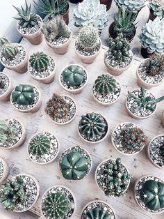 Cactus and succulents. Cacti And Succulents, Planting Succulents, Planting Flowers, Succulent Pots, Cactus Plante, Plant Aesthetic, Decoration Plante, Plants Are Friends, Cactus Y Suculentas