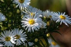 Осенние цветы способны украсить вашу обстановку и поднять настроение
