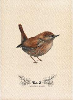 Love these chubby little birds, A Field Journal: Watercolor Wings , Winter Wren Art Et Illustration, Illustrations, Art Paintings, Watercolor Paintings, Painting Art, Watercolor Bird, Little Birds, Pics Art, Bird Prints