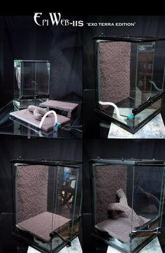 The Lifespan of a Bearded Dragon Depends on Proper Care Gecko Terrarium, Reptile Terrarium, Gecko Vivarium, Diy Terrarium, Tarantula Enclosure, Reptile Enclosure, Baby Tortoise, Tortoise Care, Glass Aquarium
