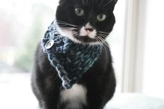 The Triangle Cowl for Tiny Creatures by Sylvia Bo Bilvia. Knit this cool Free Pattern for your four legged furball. Sylvia also has a matching cowl pattern for you to be matchy with your kitty. Christmas Knitting Patterns, Knitting Patterns Free, Crochet Patterns, Free Pattern, Knitting Designs, Crochet Animals, Cat Crochet, Crotchet, Free Crochet