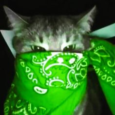 Dangerous Cat, Anime Faces Expressions, Emo Art, Memes, Cat Bandana, Funny Reaction Pictures, Gothic Anime, Black Aesthetic Wallpaper, Pretty Cats