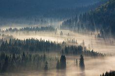 Wonderful Nature & Fog Photography #photography #photo http://www.fubiz.net/2017/03/13/wonderful-nature-fog-photography/