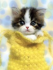 Cutest Teacup Kittens one Cute Animals Love Images plus Draw So Cute Animals Coloring Pages; Cute Animals Sleeping Gif because Cute Cartoon Animals With Big Eyes Coloring Pages Kittens And Puppies, Cute Cats And Kittens, Kittens Cutest, Fluffy Kittens, Tiny Puppies, Ragdoll Kittens, Bengal Cats, Pretty Cats, Beautiful Cats