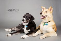 Joey and Bear - Sarah Beth Photography