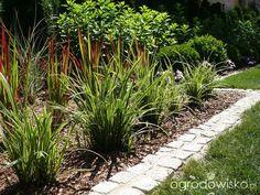 Ogrodowy powrót do dzieciństwa. - strona 603 - Forum ogrodnicze - Ogrodowisko