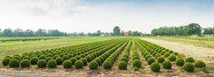 Louise del Balzo Garden Design - Google Search