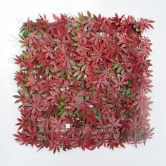 12 Pieces 50cm x 50cm Anti-UV Red Maple Leaves Artificial Plants Hedge Fence Garden Decoration Hedge Panels Privacy Screen - ICON2 Luxury Designer Fixures  12 #Pieces #50cm #x #50cm #Anti-UV #Red #Maple #Leaves #Artificial #Plants #Hedge #Fence #Garden #Decoration #Hedge #Panels #Privacy #Screen
