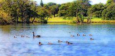 Serenity on a Pond by Miroslava Jurcik