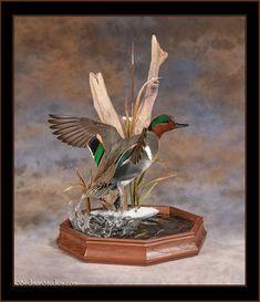 Duck Hunting Decor, Hunting Cabin Decor, Hunting Humor, Taxidermy Display, Bird Taxidermy, Duck Mount, Teal Duck, Green Wing, Wallpaper