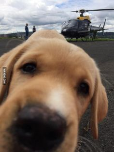 Trying to take a photo of a helicopter when suddenly... - 9GAG
