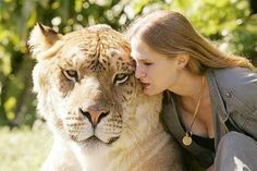 ligers and tigons | Of Ligers and Tigons.