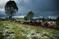 Countryside near Osorno, Chile